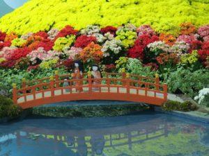 flores-e-morangos